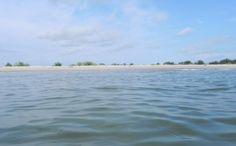 Бычок подошел к берегу с восточной стороны косы