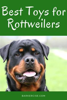 Best Type of toys for Rottweilers The must-have toy for Rottweilers Best Chew Toys for Rottweilers Toys for Rottweilers that shred Ball Toys for Rottweilers Enrichment Toys for Rottweilers Exercise Toys for Rottweilers Toys for a Rottweiler puppy Rottweiler Names, German Rottweiler, Rottweiler Training, Rottweiler Funny, Rottweiler Puppies, Pitbull, Cute Dogs Breeds, Dog Breeds, Training Your Puppy