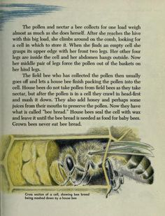 The first book of bees