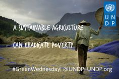 A sustainable agriculture can not only create opportunity for future environmental development but also eradicate poverty in the rural area.  Like and pin this photo to show your support!  Photo: UNDP