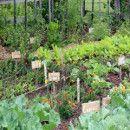 Comenzando el cultivo de alimentos de forma sostenible