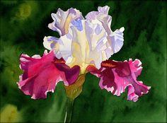 Watercolor Pictures, Watercolor Print, Watercolor Flowers, Watercolor Paintings, Watercolours, Watercolor Ideas, Painting Art, Art Floral, Iris Art