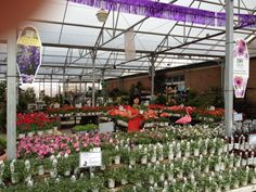 Proven Winners at Calloway's Nursery in North Plano Proven Winners, Nursery, Garden, Flowers, Plants, Garten, Baby Room, Lawn And Garden, Gardens