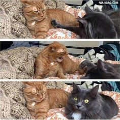 Want to find out if your babe still mad at you.  #9gag #angry #kitten #struggle #coldwar @9gagmobile by 9gag