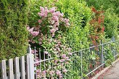 Sichtschutz Die 12 besten Heckenpflanzen Garten