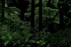 greenreblooming:  walking the woods #226 set summer 2015