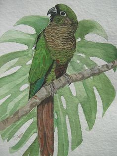 Parrot by Tanya Simon
