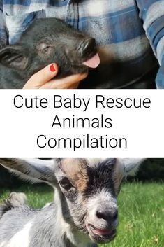 These cute baby animal rescues will brighten up your day! ❤ ... #cuteanimals #babyanimals #rescueanimals #cute Animal Rescue Stories, Goat Farming, Vegan Animals, Animal Rights, Petunias, Cute Baby Animals, Animal Crossing, Cute Babies, Things To Sell