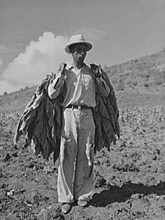 Tobacco picker in Guánica, Puerto Rico (1943)