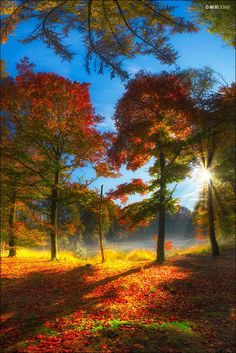 Sunrise on a beautiful fall day. Beautiful Sunset, Beautiful World, Beautiful Places, Fall Pictures, Pretty Pictures, Autumn Photography, Landscape Photography, Autumn Scenes, Nature Photos