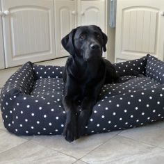 Kilda in our luxury Combination Bolster Dog Bed