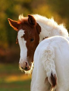 A sweetie pie horse, My life in the woods