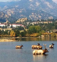 Lake Estes.....fish, run, walk, rent a deck boat, picnic, watch the elk.  Golf course is near by as well!