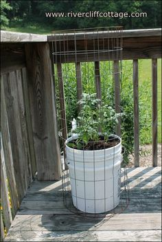 You can usually find someone to give you a five-gallon bucket or you can buy one for about $2.50 (Lowe s).   Drill 4-5 holes on the bottom for drainage.  Add some compost/soil that drains well followed by your tomato plant!