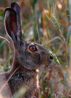 Rabbit by Sarb-Gligor Florin