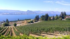 Best Things to Do in the Okanagan Valley, British Columbia - Map & Guide British Columbia, Stuff To Do, Things To Do, Valley Road, Canada Travel, Paths, The Neighbourhood, Road Trip