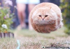 Running Cat - by Perfectly Timed Photos