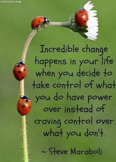 incredible change life quotes quotes positive quotes quote flower life positive wise advice wisdom life lessons positive quote ladybugs