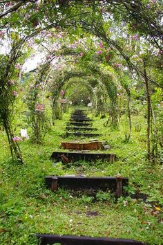 Flower Tunnel in the Boquete Highlands, Boquete, Panama