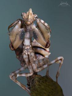 Mundo de macros - Macro World #Macros - #Insects - #Zoom - # Focal Area - #picture - #color #Macros - #Insectos - #Zoom - #Apertura Focal - #Imagen - #color Photo No photos, please!!! by Yvonne Späne on 500px