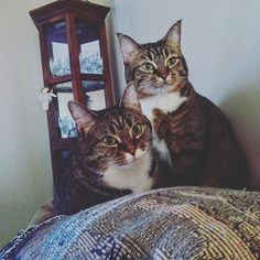 Pretty as a picture, Ashlee-Grace & Abby Rose. Submitted by: Maria Ann Blanton #catlife #catsoftheday #whatcatsdo #cats