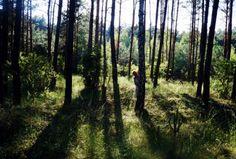 Forest, sun, arhavini, free time