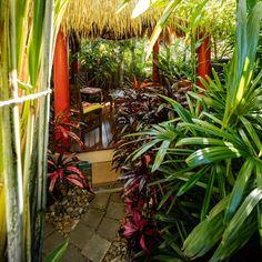 Create your own tropical backyard oasis - Better Homes and Gardens: DIY, Renovation, Gardening & Recipes Tropical Backyard Landscaping, Tropical Garden Design, Landscaping With Rocks, Landscaping Ideas, Leafy Plants, Foliage Plants, Tropical Plants, Tropical Gardens, Balinese Garden