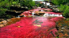 caño cristales river colombia