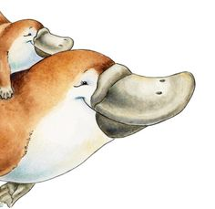 and baby room Watercolor Nursery Art. Just like Mum Mom and baby Platypus Watercolor Nursery Art. Just like Mum Mom and baby Platypus Baby Platypus, Animal Drawings, Art Drawings, Drawing Art, Baby Drawing, Australian Animals, Baby Art, Watercolor Animals, Art Pictures