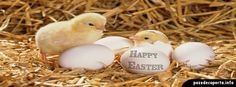 Here we see baby chicks hatching and other baby animals that are born in Spring. Did you know that many cute baby animals are born in Spring? Baby Chickens, Raising Chickens, Easter Chickens, Animals Hatched From Eggs, Farm Animals, Cute Animals, Humorous Animals, Shell Animals, Chicken Pictures