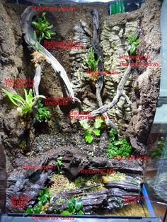 Duff's Terrarium Collection