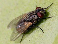 Un répulsif maison pour lutter efficacement contre les mouches