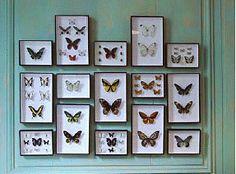 Gilbert Lachaume, expert en entomologie et voyageur philanthrope - [Deyrolle - Taxidermie, entomologie, curiosités naturelles]