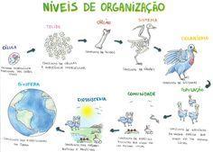 Mapa Mental: Niveis de Organizacao em Biologia