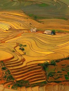 Terraces on rice field. Sapa, Vietnam.