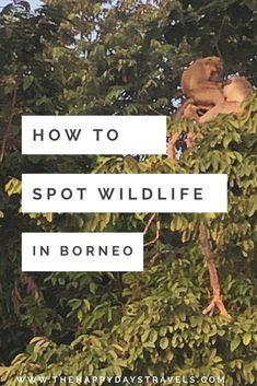 The Best Wildlife Safari in Borneo - A 3 Day Trip with Borneo Eco Tours Malaysia Travel, Asia Travel, Travel Around The World, Around The Worlds, 3 Days Trip, Amazing Destinations, Travel Destinations, David Attenborough, Working Holidays