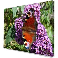 Dagpauwoog en vlinderstruik op Canvas