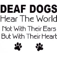 Deaf Dogs Quote