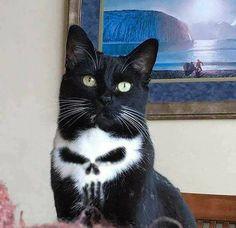 We named him Frank - Cats - Katzen Animal Jokes, Funny Animal Memes, Funny Animal Pictures, Cat Memes, Funny Cats, Funny Memes, Cats Humor, Cute Little Animals, Cute Funny Animals