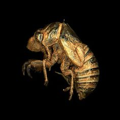 8/25 - I really like the composition of the empty cicada shell paired with the black background. It gives an erie feeling.