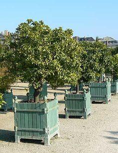 Versailles Planter   Google Search