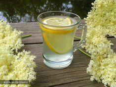 Socata - secretele celei mai bune bauturi romanesti din flori de soc - Articole Diverse