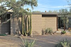 A home showcasing the beautiful and rich mid-Century modern architecture is currently available for sale in Paradise Valley. Paradise Valley Arizona, Desert Homes, Modernism, Midcentury Modern, Indoor Plants, Modern Architecture, New Homes, Mid Century, Google Search