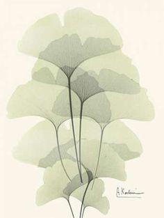 Gingko Leaves in Green 2