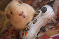 Aahhhh!! This looks like our littlecakes - except, he prefers the N64 system ;)