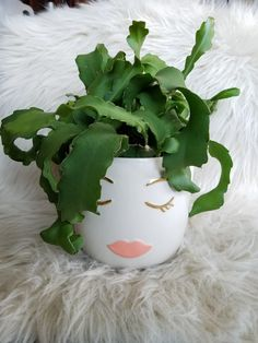 An Orchid Cactus makes great hair for this beautiful lady! The pot just makes me smile. Succulent love.
