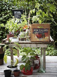 moestuin in potten, bakken en kistjes# foto Home and Garden