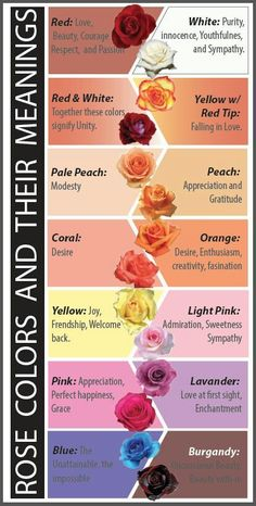 what are the meanings of different color roses