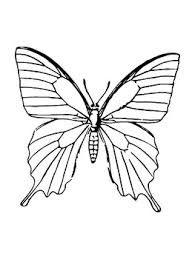butterfly template – Google-Suche Butterfly Drawing Outline, Butterfly Line Art, Butterfly Sketch, Outline Art, Butterfly Template, Butterfly Tattoos, Line Art Tattoos, Body Art Tattoos, Symmetry Activities