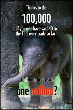 Change starts with us. Save the elephants. I said no did you?